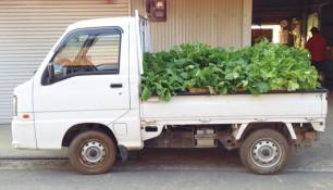 10592164野菜トラック